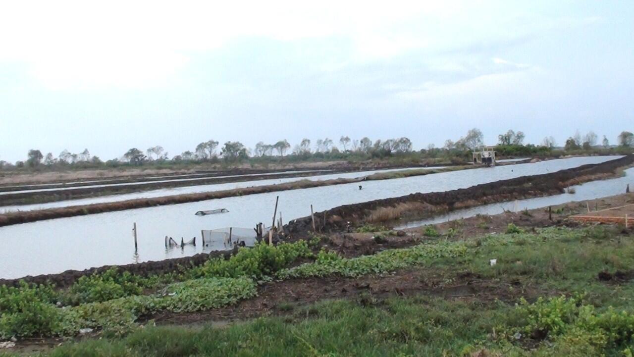 Tanah dan empang Udang pancet Bandeng BEKASI