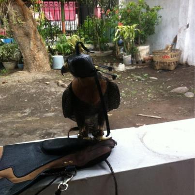 Tentang Burung Predator