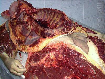 {HOT} Proses Pembelahan Daging Orang