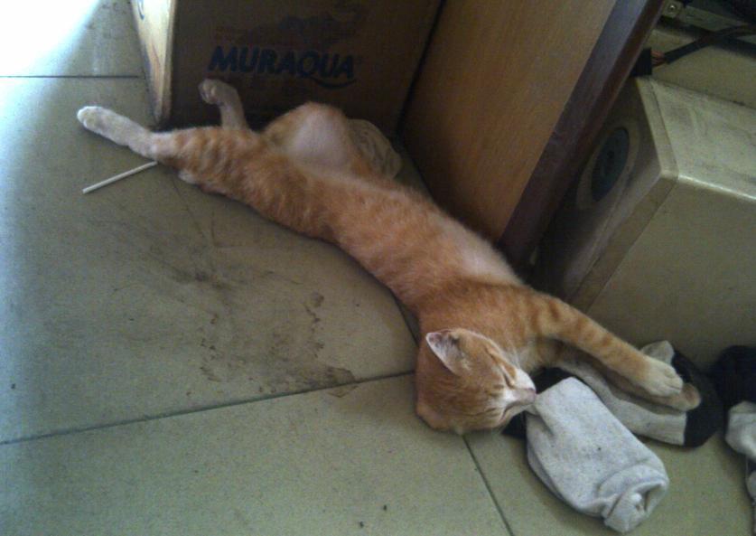 Kucing nyasar ke warnet ane.. Pingsan kucingnya -_-