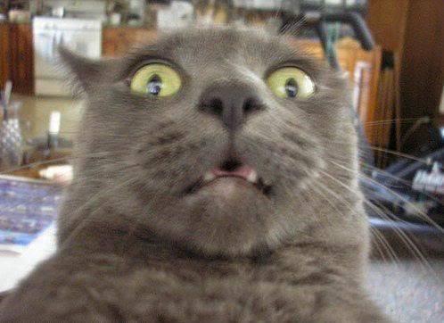 Unduh 63+  Gambar Kucing Kaget Paling Lucu HD
