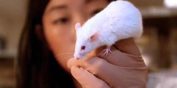 Fakta Unik Mengenai Tikus Putih
