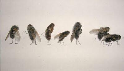 Kreasi Lucu Dan Unik Dari Lalat Mati Gan...!!!