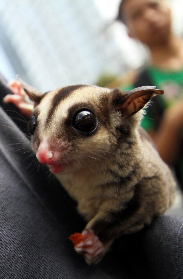 Hewan-hewan lucu nan langka dari indonesia. | KASKUS