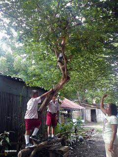 [Share] Pohon Apa Yang Sering Agan Panjat Di Waktu Kecil ?