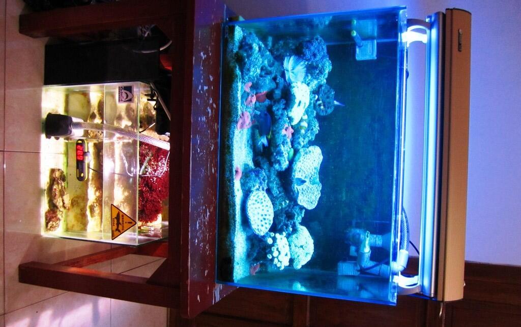jual akuarium air laut murah