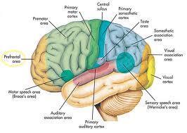 Mitos kecerdasan yang perlu anda ketahui