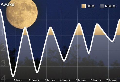 Mengenal Siklus Tidur Pada Manusia