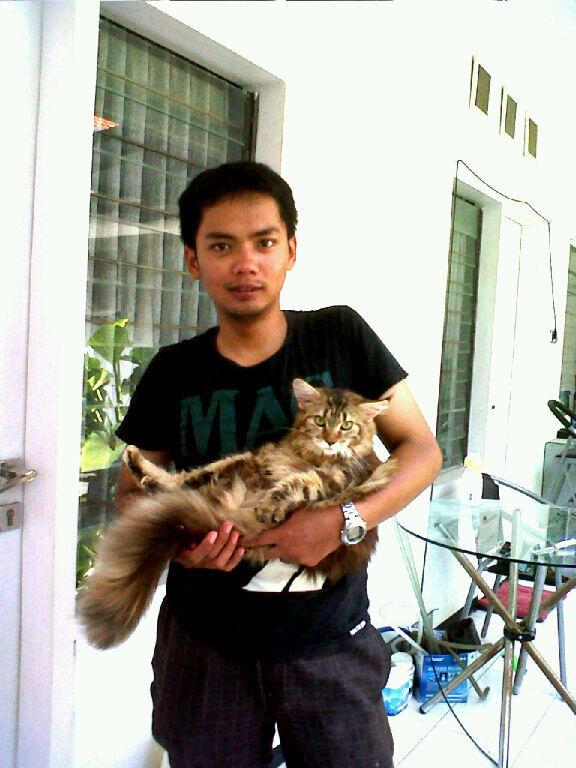 Jasa Grooming Kucing