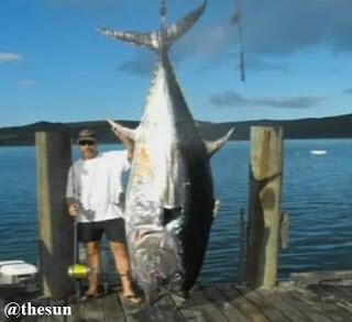 Wow !! Nelayan Selandia Baru Berhasil Menangkap Ikan Tuna Seberat 335kg