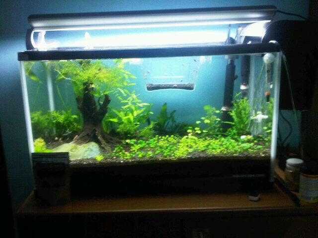 Terjual WTS Jual Aquarium Aquascape / tank udang   KASKUS