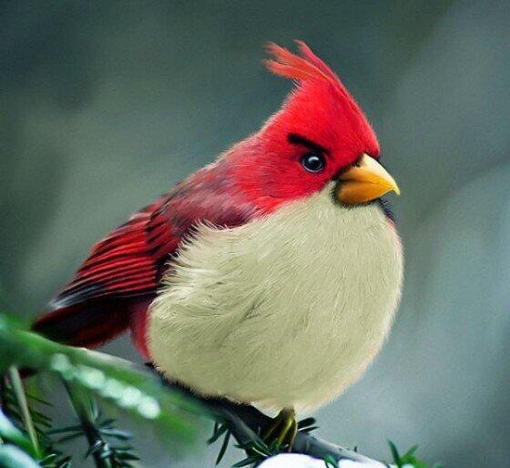 Angry Birds di kehidupan nyata ternyata ada gan