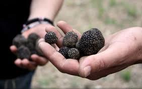 Jamur Truffle, Jamur Termahal Di Dunia