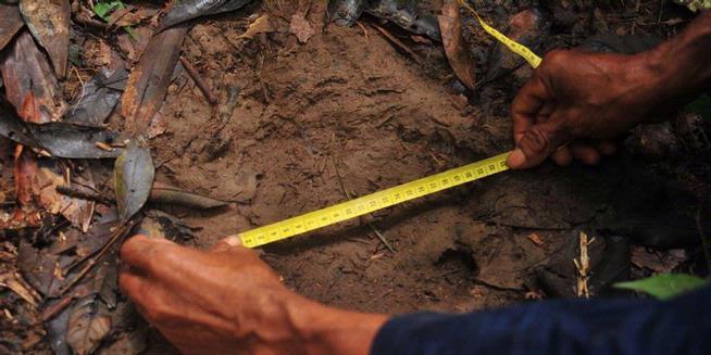Badak Sumatera di Kalimantan Perlu Penyelamatan Cepat