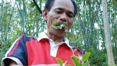 Inilah Manusia Pemakan Rumput (Luar Biasa)