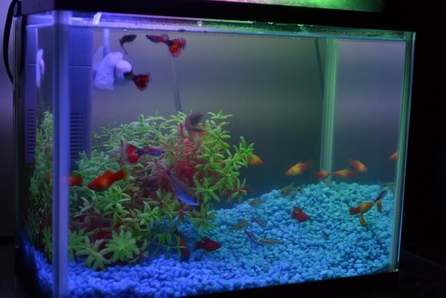 Terjual Dijual Aquarium