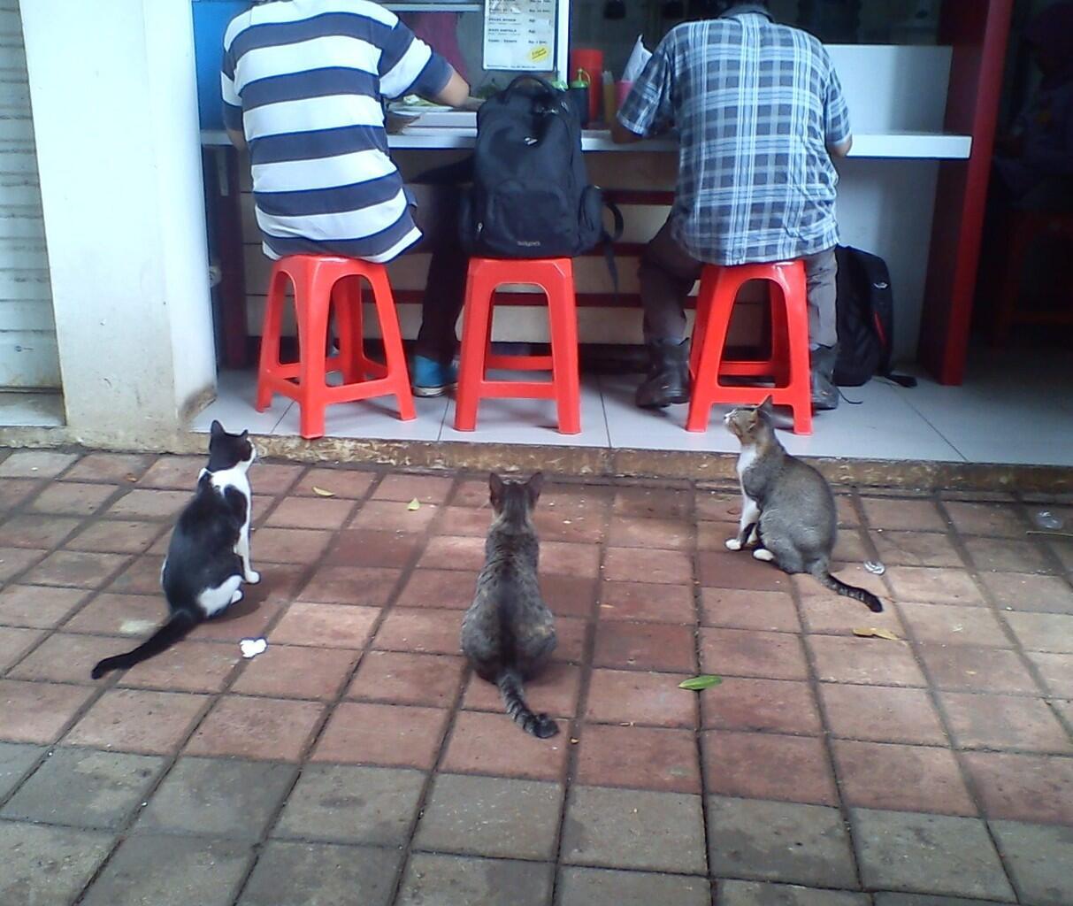 Trio Kucing - Kasian deh gan