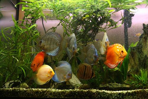Download 50 Koleksi Gambar Ikan Hias Dan Namanya HD Terbaru