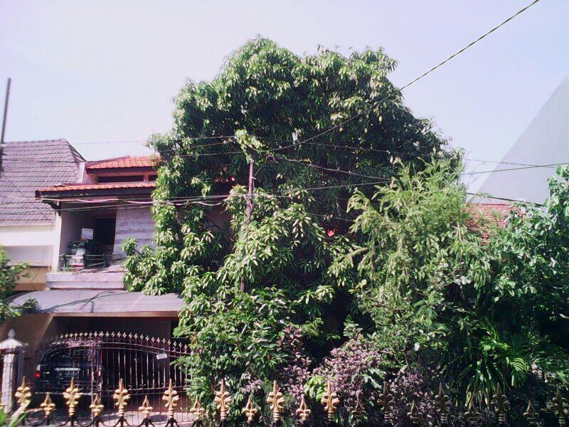 Rumah Tinggal Dijual, lokasi Rungkut Asri, Surabaya