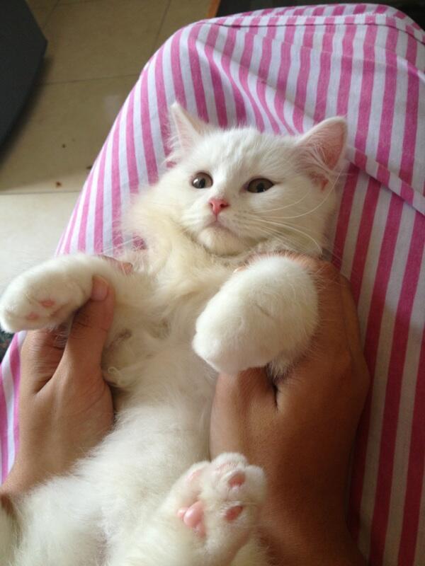 Segala Tentang Merawat Kucing Kaskus