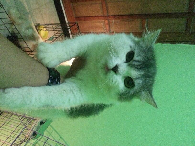 Download 80+  Gambar Kucing Manis Imut HD