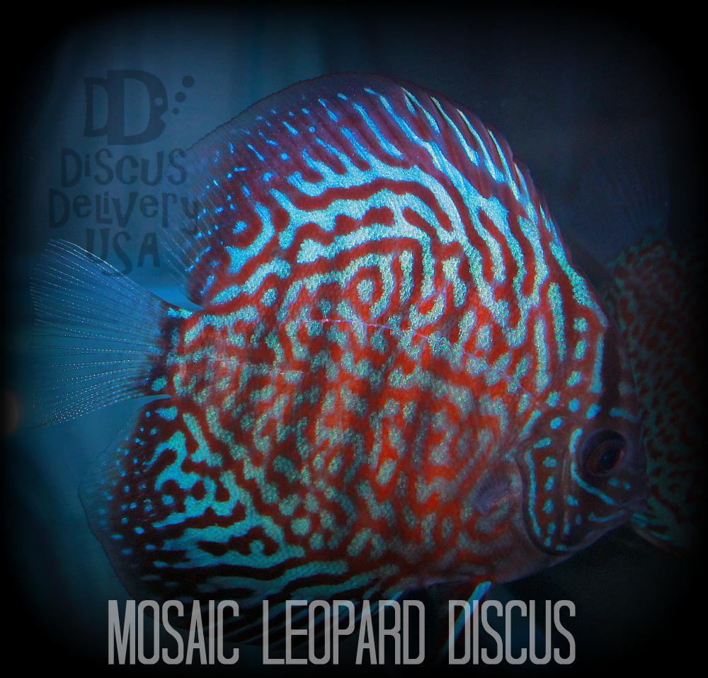 Discuslab123
