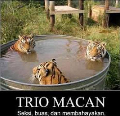 trio macan sexy mandi and telanjang