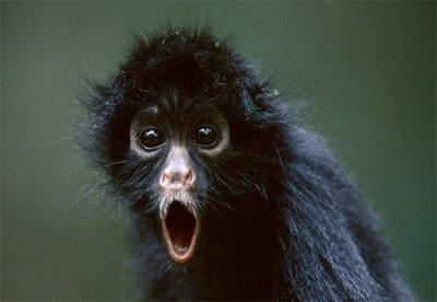 Monyet ekspresikan !!
