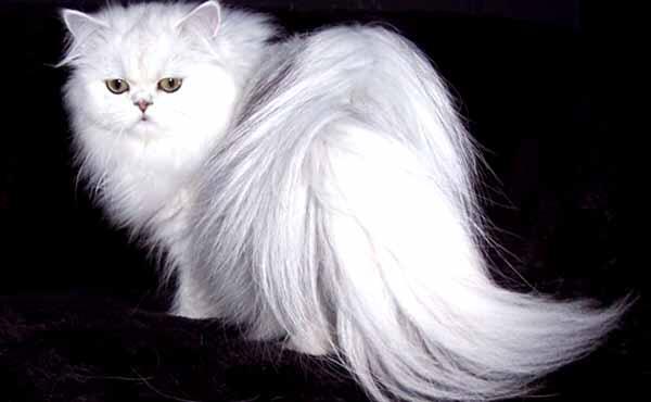 Rahasia Nabi Muhammad SAW Sangat Menyayangi Kucing