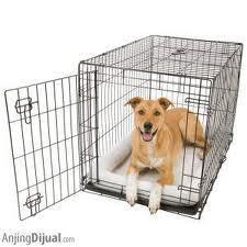 Tips - Tips Menjinakkan Anjing [PIC++]