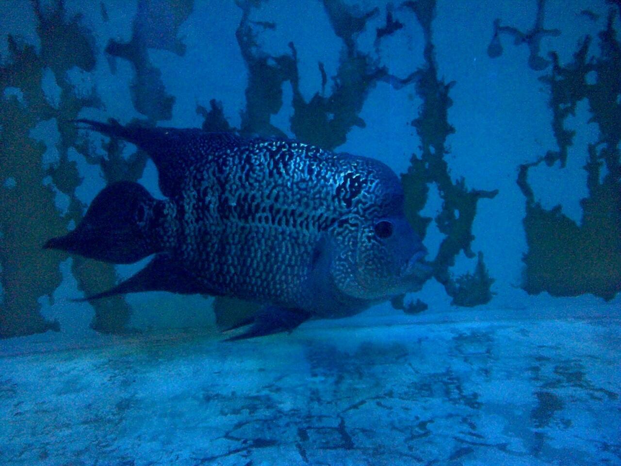 Jual Aquarium + Louhan + Perlengkapan Mumer Abies.....