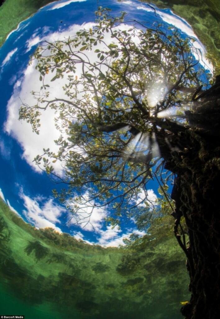 Amazing! Foto Jawara di ajang Best Underwater Competition VII 2013