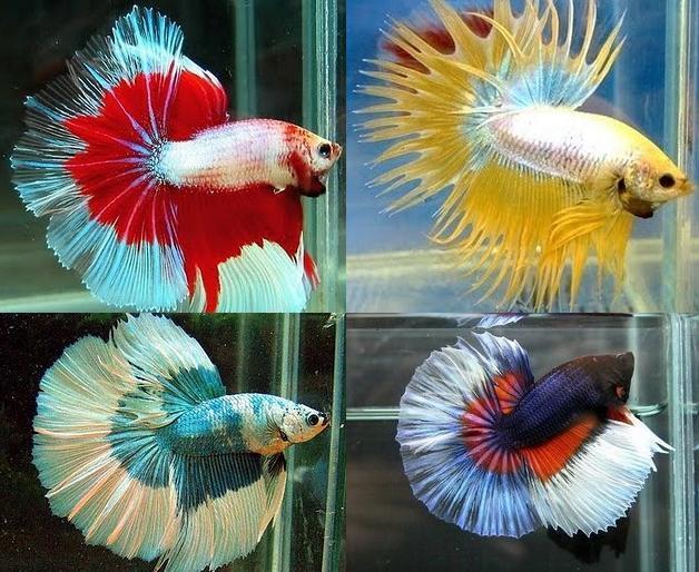 32 Ikan Tercantik di Dunia - Page 2 | KASKUS