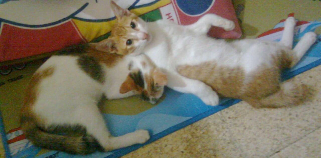 Imut Gan Kucing Kucing Fotogenik Dengan Pose Unik Kaskus