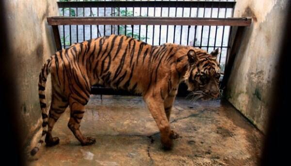 Nightmare Zoo / Ekspresi Hewan di Kebun Binatang (Pic ++)
