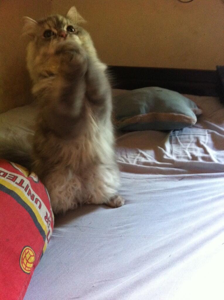10 Kisah Kucing Yang Mengagumkan Kaskus