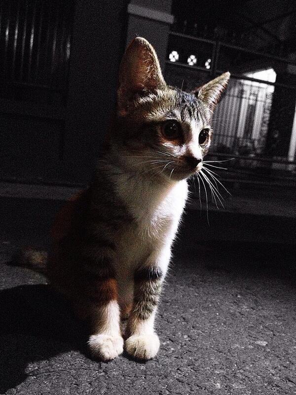 12 Ras Kucing Termahal Di Dunia Kaskus