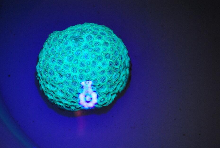 Senter UV Led Money Detector &Fosfor Detector, Import