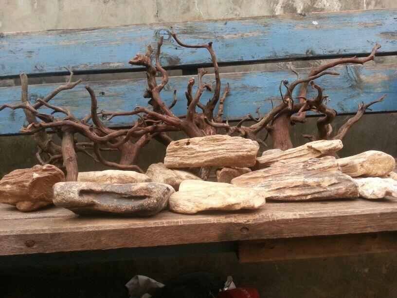 Terjual Batang Kayu, Moss, flora Aquascape : taiwan, flame ...