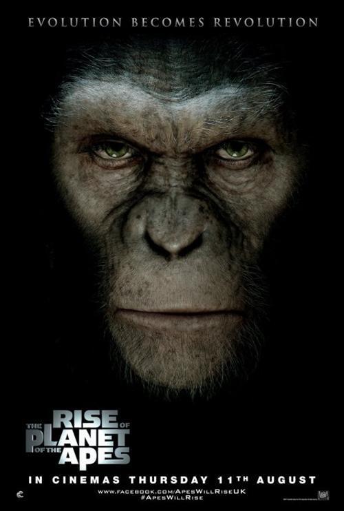 Monyet dan Keluarganya yang Sukses di Hollywood!
