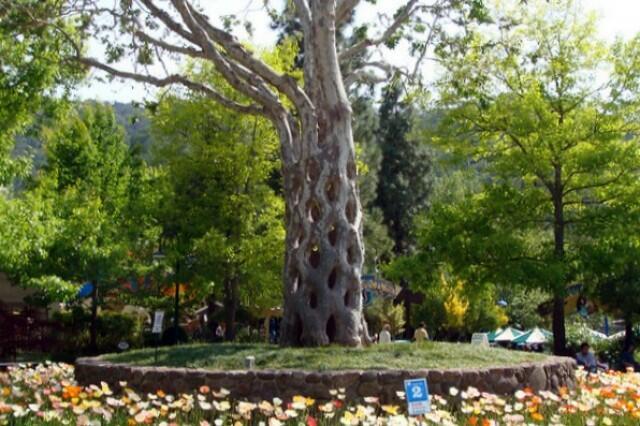 ~๑๑ 10 Pohon Istimewa dan Terbesar di Dunia.๑๑~[CEKIDOT]