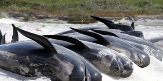 (aneh) Tujuh hewan ini melakukan bunuh diri