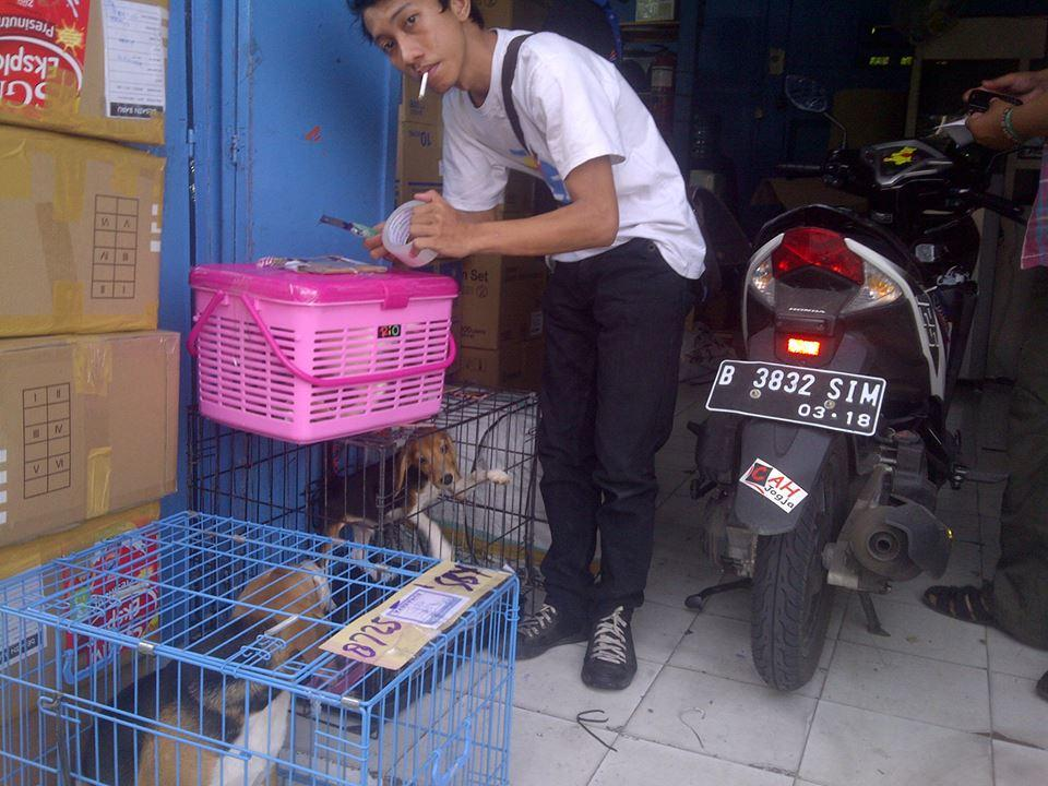 Pepeng Pet Shop Jogja Penipu