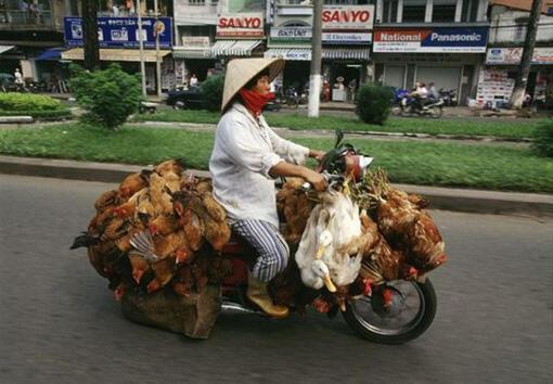 Motor Bebek mah udah biasa gan, ni yang baru MOTOR AYAM