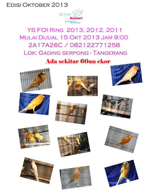 Yorkshire canary Italia harga mulai 4,5juta