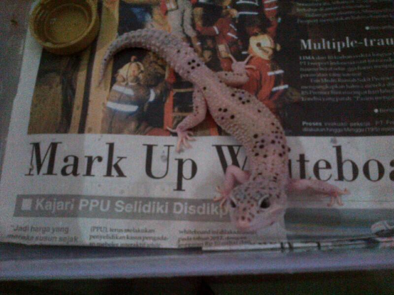 WTS Poss BLack Hole Female Balikpapan