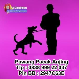Jasa Pawang Pacak Kawin Kimpoi Anjing Murah Tangerang Jakarta