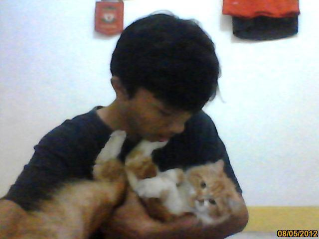 Anak Kucing Persia Main kong endut&lucu 3bulan divaksin Jakarta-Semarang