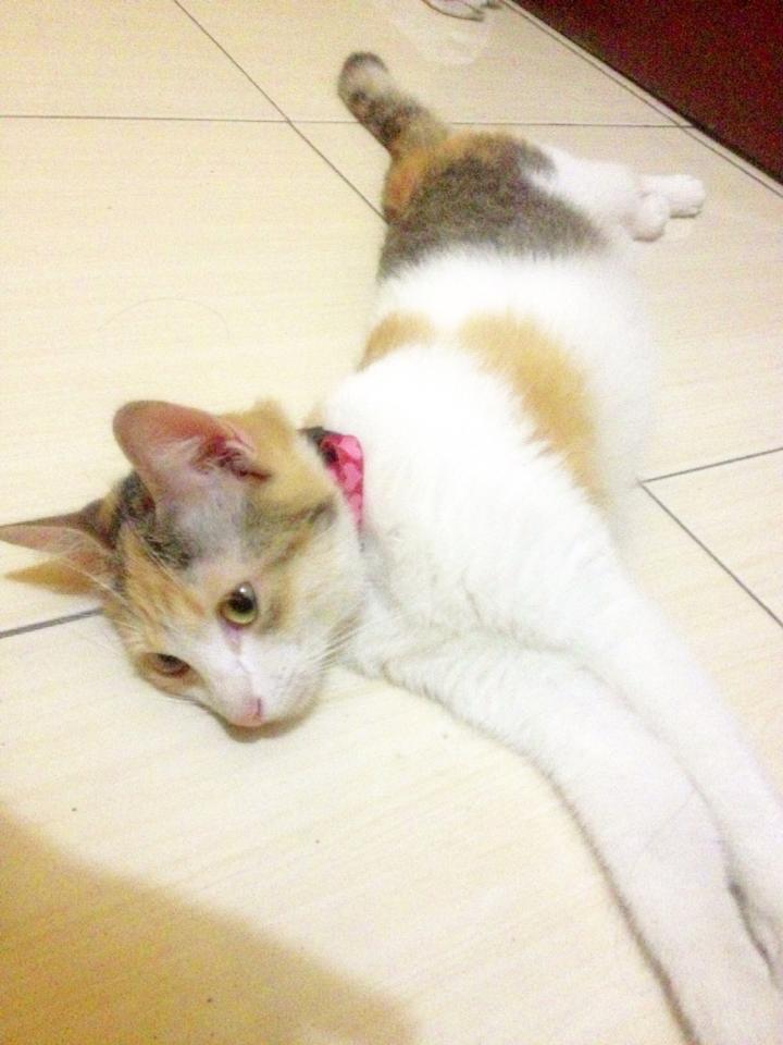 kucing untuk di adopsi