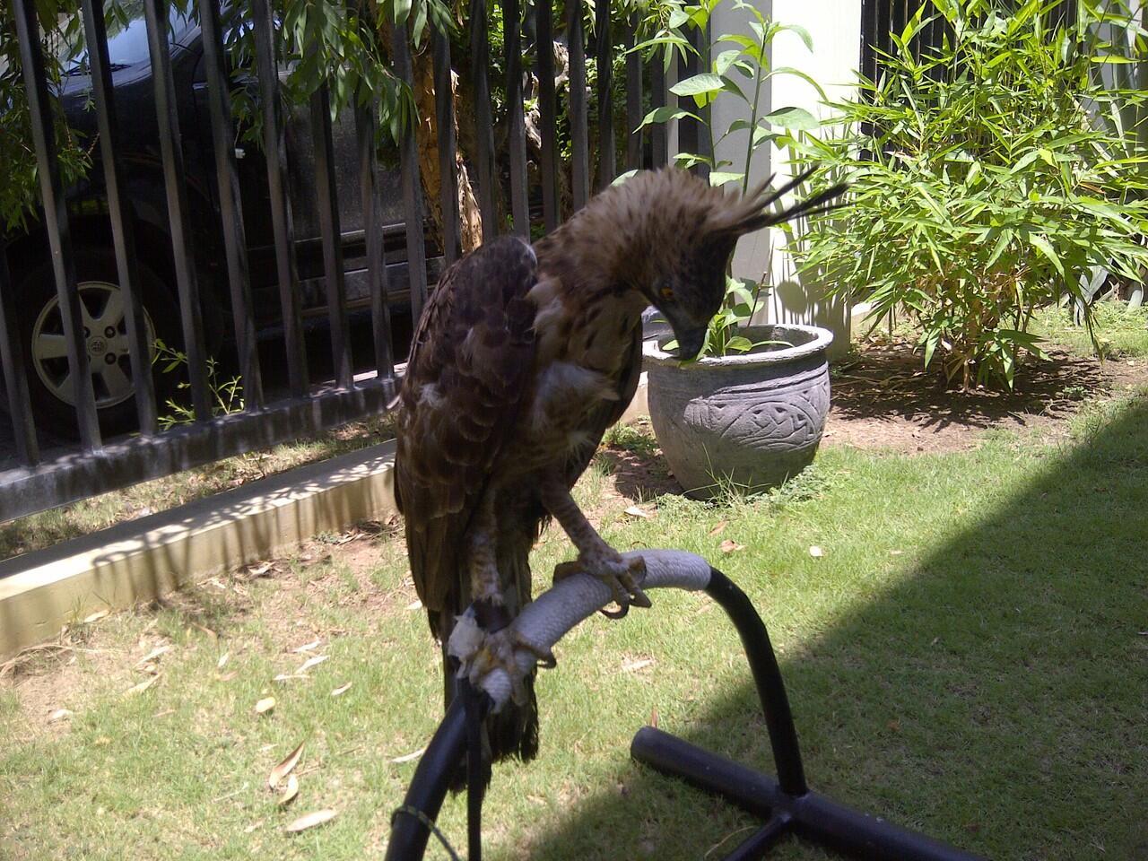 Jual BOP mountain hawk eagle ( MHE )